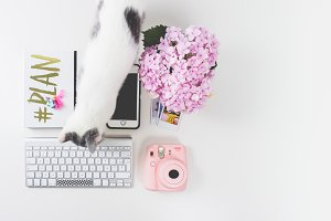 Flatlay Feminine Desk ft British Cat
