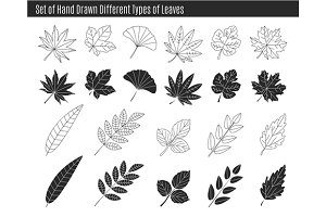 Set of different types of leaves