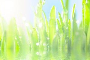 fresh wet grass in sun rays, closeup