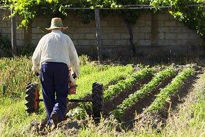 farmer working in vegetable crops