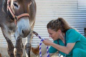 Veterinary in the farm