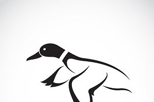 Vector of flying wild duck design