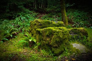 Mossy Forest Chair