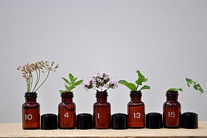 small jars with plants
