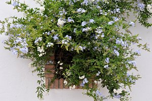 window covered by flowers
