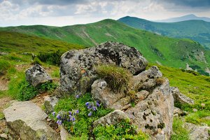 Carpathian montains view