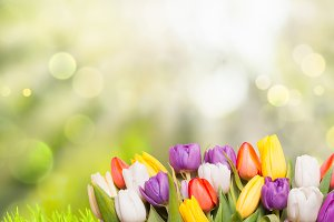 Spring background tulips