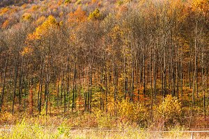 Forest in autumn colors