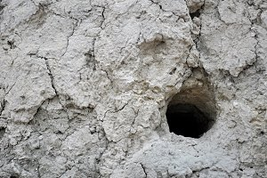 hole nest of bee-eater