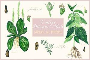 Vintage botanical medical plants