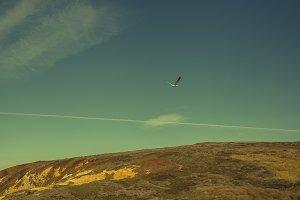 Bodega Bay Bird