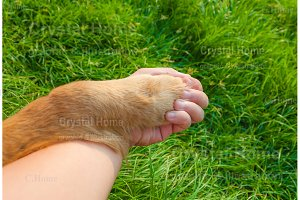 Dog and human hold hands with love 2