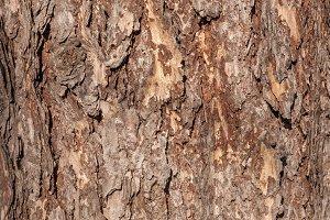 texture bark of a tree