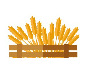 Wheat Concept