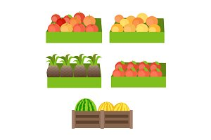 Set of Boxes with Fruits