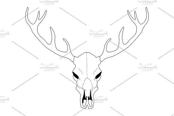 Deer skull. Vector - Illustrations