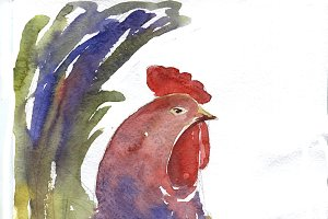 Watercolor cocks illustrations