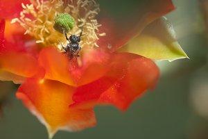 The Pollinator 1
