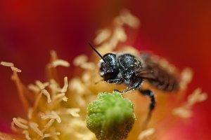 The Pollinator 2