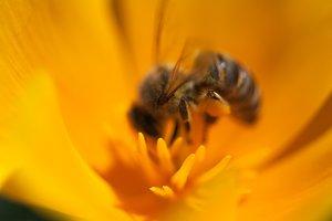 The Pollinator 3