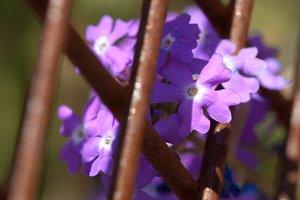 Purple and Rust