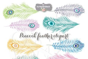 VECTOR Peacock feather clipart