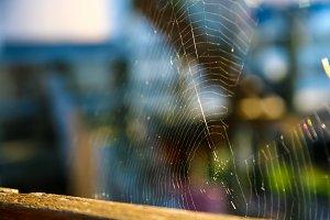 Spiderweb Sunset