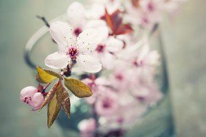 spring blossoms in a glass vase