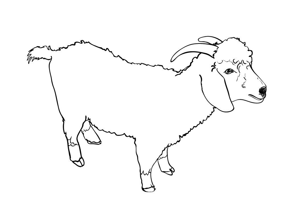 how to draw a goat head