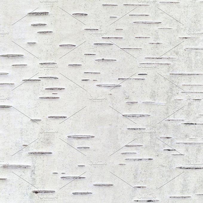 birch tree bark ~ Abstract Photos on Creative Market