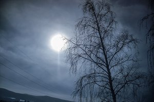 Tree winter sun grey sky