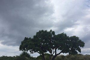 Cloudy Tree