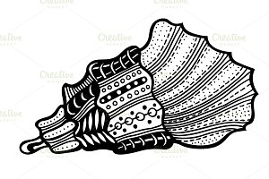 Hand Drawn seashell.