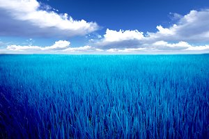 landscape grass of Blue Meadow