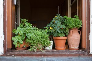 Herbs in plant pots
