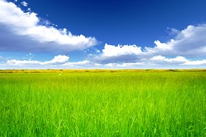 Rice meadow with cloud