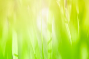 blur and soft focus of grass leaf