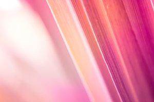 blur and soft focus of grass leaf