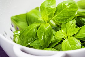 Fresh basil in colander