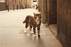 Cat on the street, Barcelona