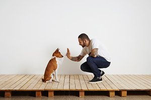 Dog training process at home