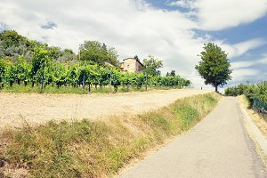 Landscape of vineyards