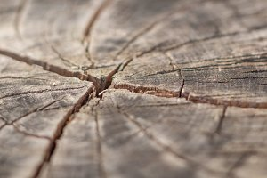 Cross Cracks in Tree Stump