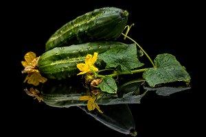 Green organic cucumbers