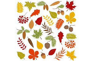 Autumn Forest Clip Art