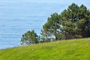 Pine trees on summer coast.