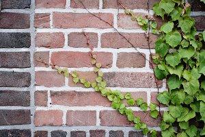 Brick Climber