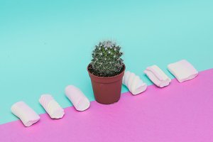 Cactus and Marshmallow