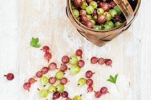 Variety of ripe garden gooseberries