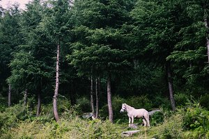 white horse in the forest